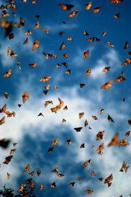 Huelga de mariposas